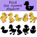 Children games: Find the correct shadow. Little cute ducklings. Royalty Free Stock Photo