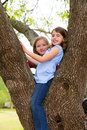 Children girls playing climbing to a tree park outdoor Royalty Free Stock Photo