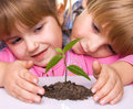Children are grown plant Royalty Free Stock Images