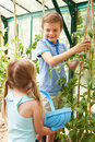 Children harvesting home grown tomatoes in greenhouse looking at each other Stock Image