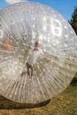 Children have fun in the zorbing ball a lot of Stock Photos