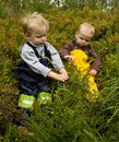 Children picking bilberries Royalty Free Stock Images