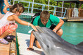 Children play with dolphins kids enjoying two Royalty Free Stock Photography