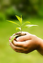 Children`s hands holding young plant against spring green background Royalty Free Stock Photo