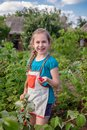 Children`s picking raspberries. A cute little girl collects fresh fruits on an organic raspberry farm. Children gardening and Royalty Free Stock Photo