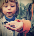 Children see a toad found in the forest focus on Stock Photo