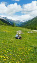 Children on summer mountain meadow with yellow dandelion flowers alps switzerland Royalty Free Stock Photos
