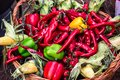 stock image of  Chili pepper. Colorful mix of freshest and hottest chili peppers. Red Hot Chili Peppers in wooden basket with corn green and yello