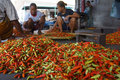 Chili traders sort the in a market in the town of solo central java indonesia Royalty Free Stock Photos