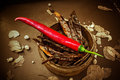 Chilli fresh and dry is herbs for food ingredient Stock Photos
