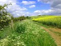 Chilterns rapeseed may sunshine over meadows in chiltern hills in bedfordshire Stock Photos