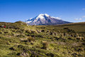 Chimborazo volcano and sheep Royalty Free Stock Photo