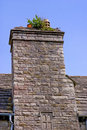 Chimney weeds growing top stack Royalty Free Stock Image