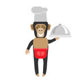 Chimp chef with dish illustration of a on a white background Stock Images