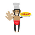 Chimp chef with pizza illustration of a on a white background Royalty Free Stock Image