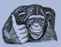 Chimpanzee Hand Drawn Royalty Free Stock Images