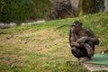 Chimpanzee in lisbon zoo alone sitting portugal Stock Photo