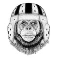 Chimpanzee Monkey Wild animal wearing rugby helmet Sport illustration