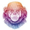 Chimpanzee, monkey Wild pirate or biker. Vector animal portrait. Sailor, motorcyclist. Print for children clothing, tee Royalty Free Stock Photo