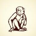 Chimpanzee. Vector illustration Royalty Free Stock Photo