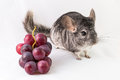 Chinchilla And Grapes