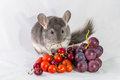 Chinchilla With Fruits