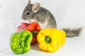 Chinchilla With Peppers