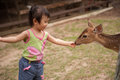 Chinese Asian girl feeding deer Royalty Free Stock Photos