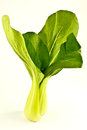 Chinese boy choy cabbage closeup of fresh bok stood vertically on light background Stock Photography