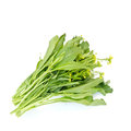 Chinese cabbage isolated on white background Stock Photos