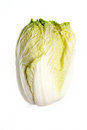 Chinese cabbage isolated on white background Stock Images