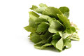 Chinese cabbage isolated on white background a bunch of Royalty Free Stock Image