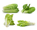 chinese cabbage ,lettuce , Bok choy, on awhite background Royalty Free Stock Photo