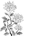 Chinese chrysanthemum ink painting on white background Stock Images