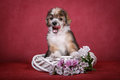 Chinese crested dog puppy on a white wreath with flowers Royalty Free Stock Photo