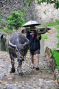 Chinese farmer with buffalo in the rain