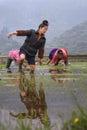 Chinese farmer girl walks barefoot through mud of paddy field.
