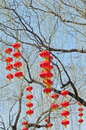 Chinese lanterns a lot of on a tree in beihai park beijing china Stock Image