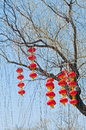 Chinese lanterns a lot of on a tree in beihai park beijing china Royalty Free Stock Photography