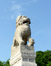 Chinese lion shi tsza brought to st petersburg russia from jilin city china in Stock Photos