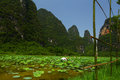 A chinese lotus farm by the karst peaks of yangshuo china Royalty Free Stock Images