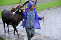Chinese Miao nationality farmer in the rain