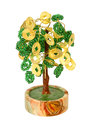 Chinese money tree Stock Photos