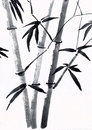 Chinese painting traditional of bamboo Stock Photography