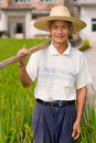 Chinese peasant senior male in the rice filed Stock Images