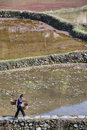 Chinese peasant woman is on path along flooded rice fields.
