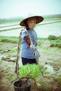 Chinese peasant working on the rice field Stock Photos