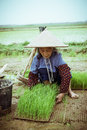 Chinese peasant working on the rice field Stock Images