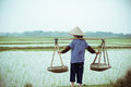 Chinese peasant working on the rice field Royalty Free Stock Images
