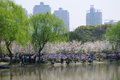 Chinese people fishing in century park pudong shanghai china and looking at the spring flowers blooming Royalty Free Stock Photography
